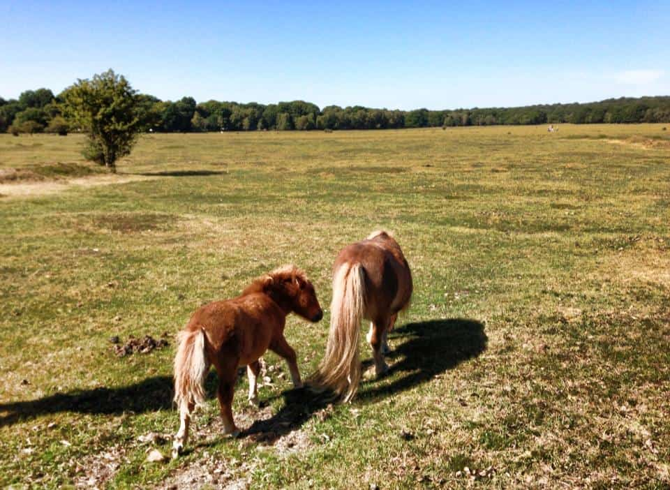 Wild Horses of New Forest by Lesya Li