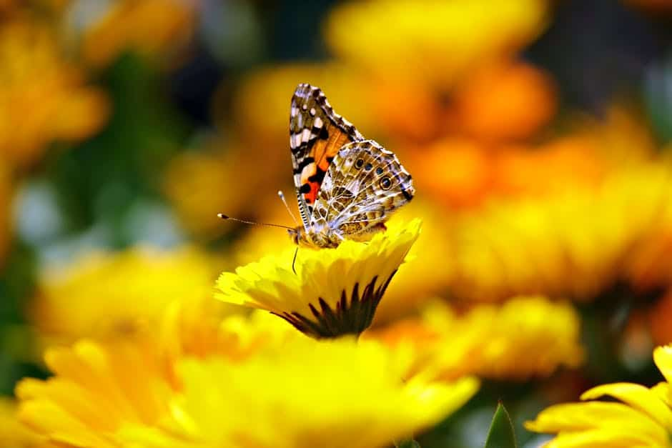 The Butterfly Effect: How to Make the Best Use of it in Life?