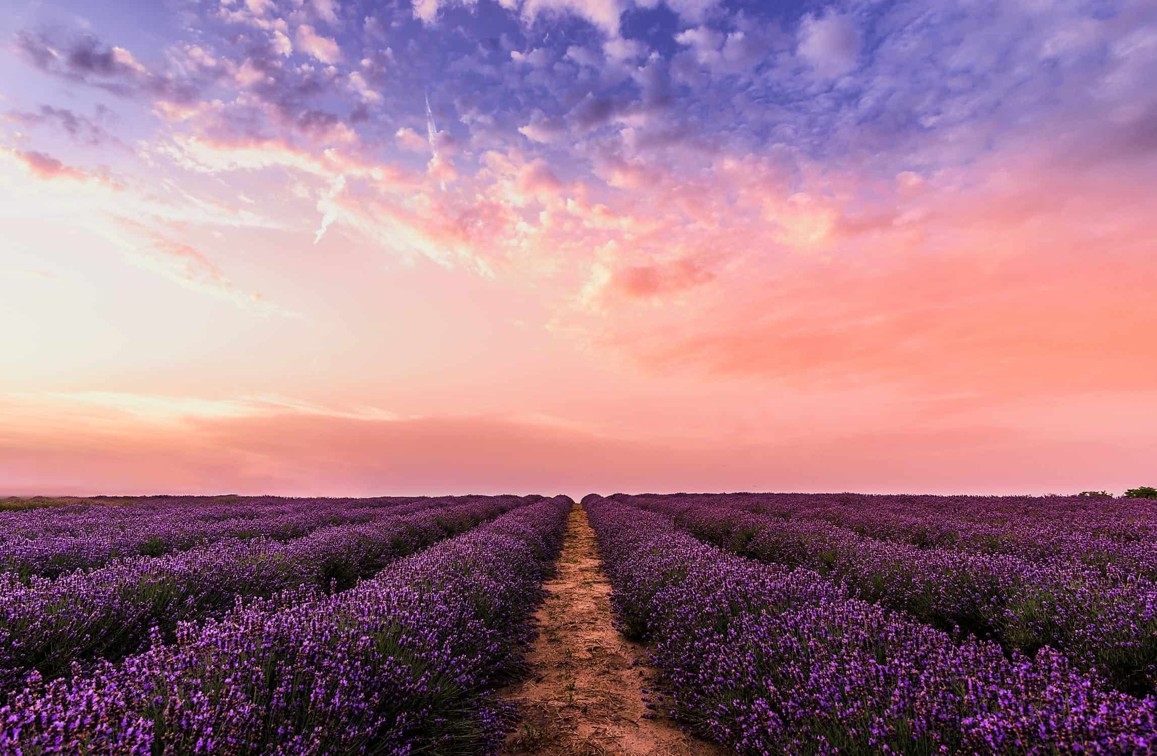 5 Amazing Essential Oils for Relieving Stress & Anxiety