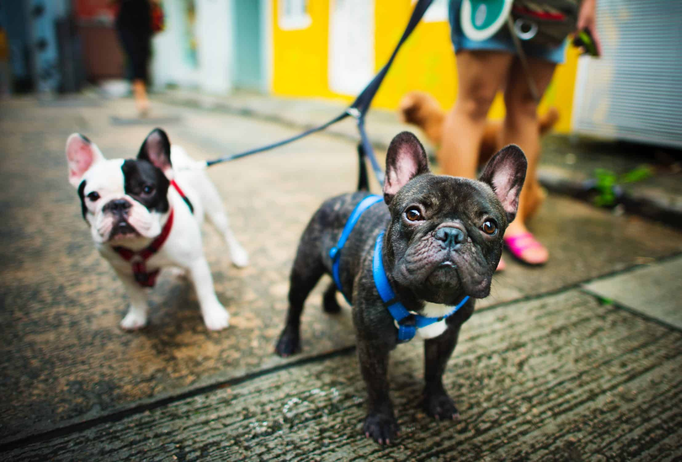 5 Dog-Friendly Hotels to Keep in Mind when Traveling in The UK